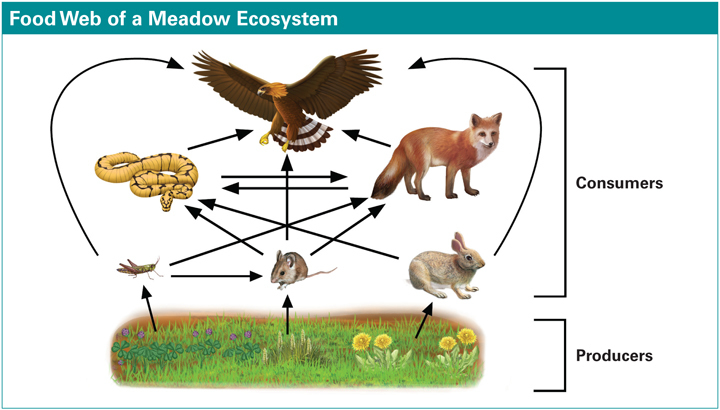Most ecosystems have